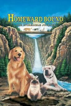 ดูหนังฟรี24ชั่วโมง Homeward Bound The Incredible Journey สองหมาหนึ่งแมว ใครจะพรากเราไม่ได้